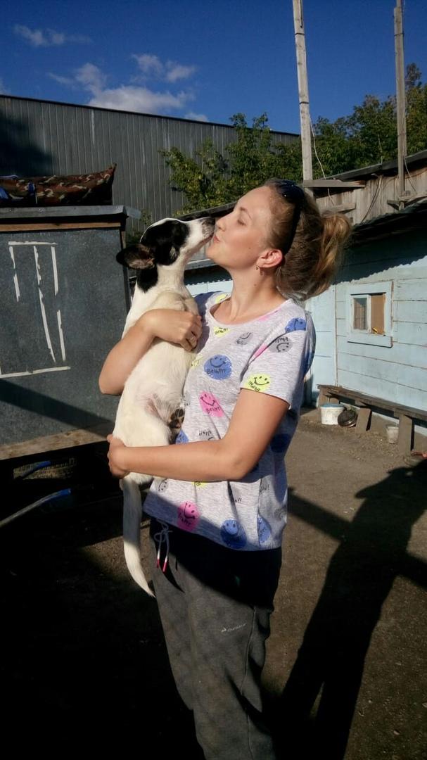 Щенки без передних лапок родились в Новосибирске ..