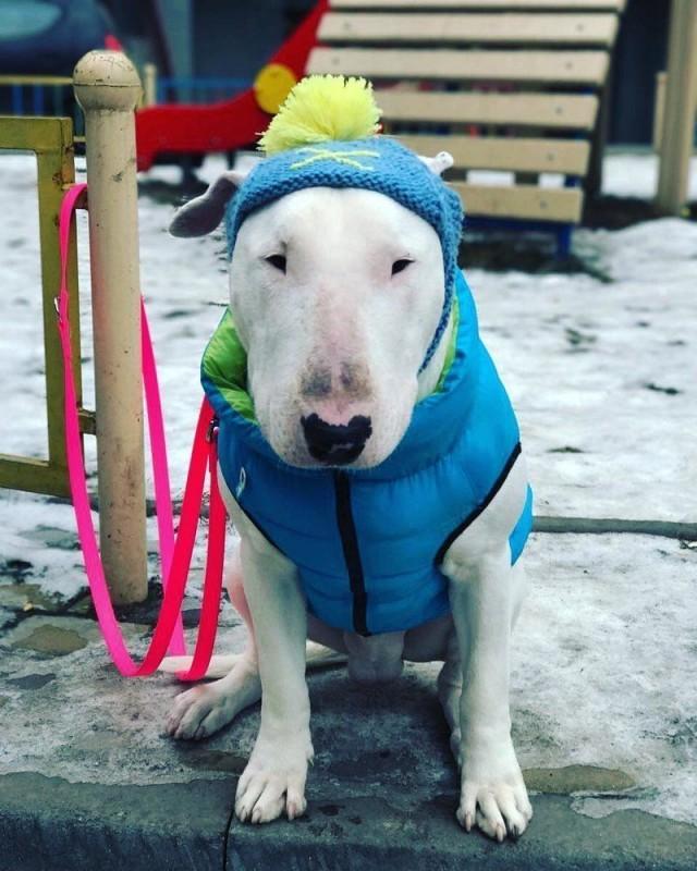 Видео: Хозяйка берет свою собаку на руки и включает эту песню. Смотрите, что вытворяет песик!