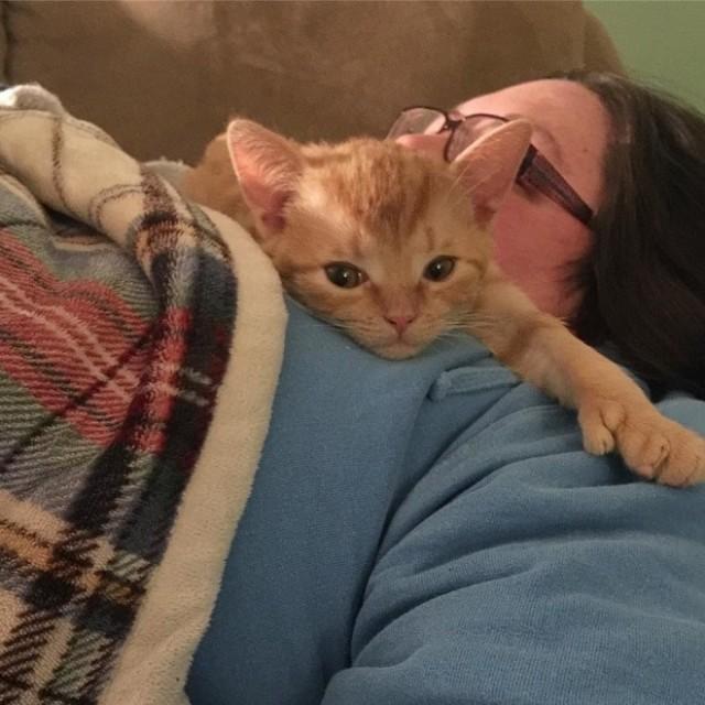 Брошенный котенок, переживший операцию на мозге, не устает обниматься с новой хозяйкой