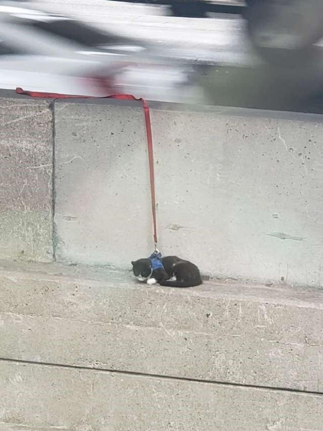 Выглянув в окно, люди были поражены: на мостовом выступе, на высоте более 75 метров, сидело живое существо