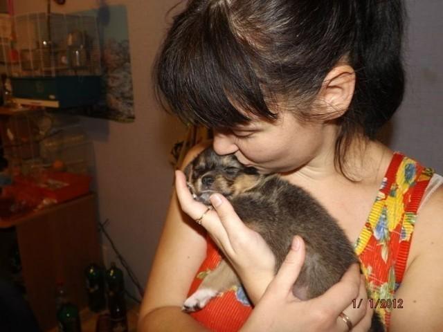 Девушка спасла семерых щенков, выброшенных на помойку в мороз,а самого слабенького оставила себе. Все твердили, что его нужно усыпить, а теперь эта девочка стала Красавицей!