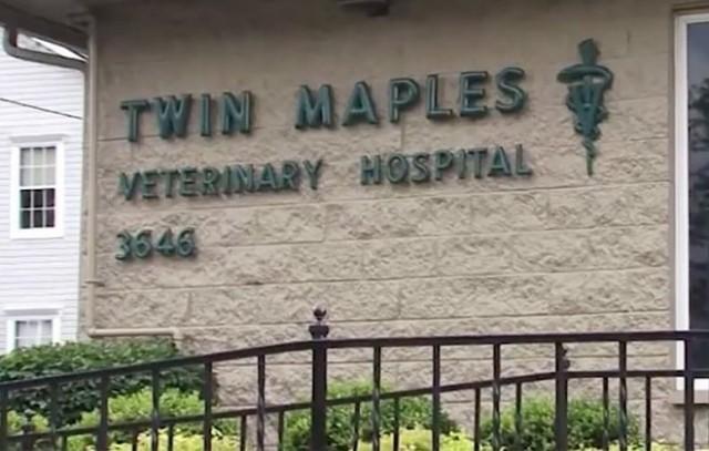 Мужчина привел в клинику бездомного пса и попросил помощи. Спасителя сначала посчитали героем, но сильно ошиблись!