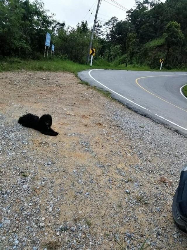пес у дороги