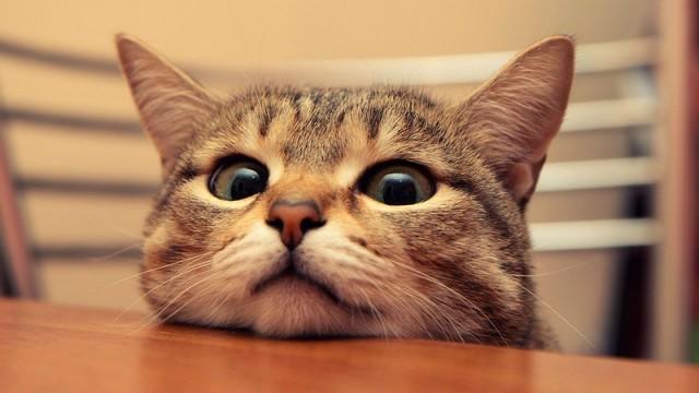 14невероятных секретов, которые скрывают кошки отсвоих хозяев