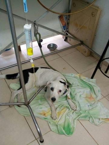Собаку бросили в аэропорту, и она умерла от грусти, не сумев пережить разлуку с хозяином