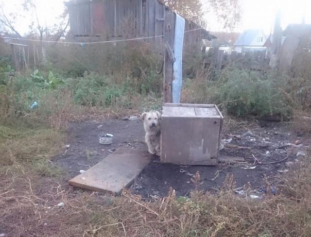 Декоративного песика держали на метровой цепи и кормили корками хлеба и картофельными очистками в частном доме в Новосибирске...