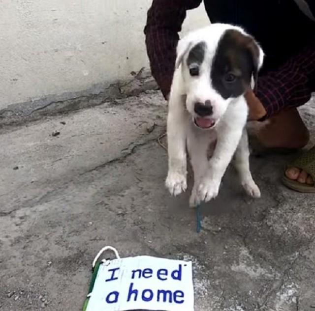 На улице топтался щенок, а на его шейке была табличка с какой-то надписью. Видео!