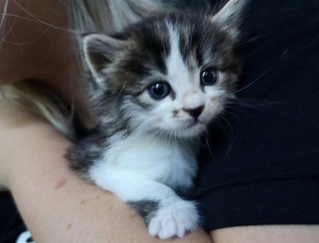 Увидев котят, кошка бросилась к ним, но через миг отчаянно «заплакала». Это были не ее малыши