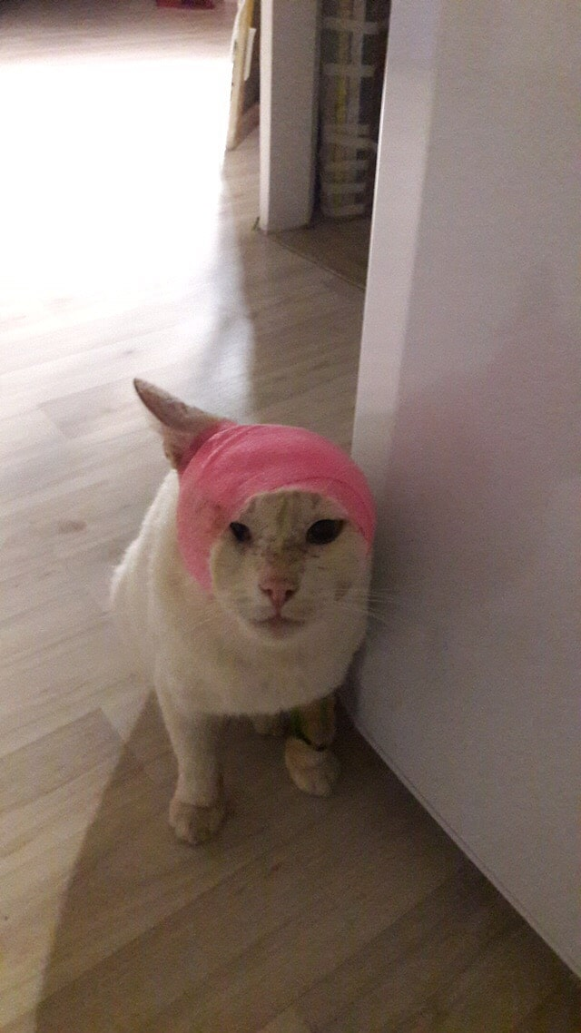 Тощий кот с окровавленным ухом попался на пути девушке. Отложив все свои дела, она поспешила помочь