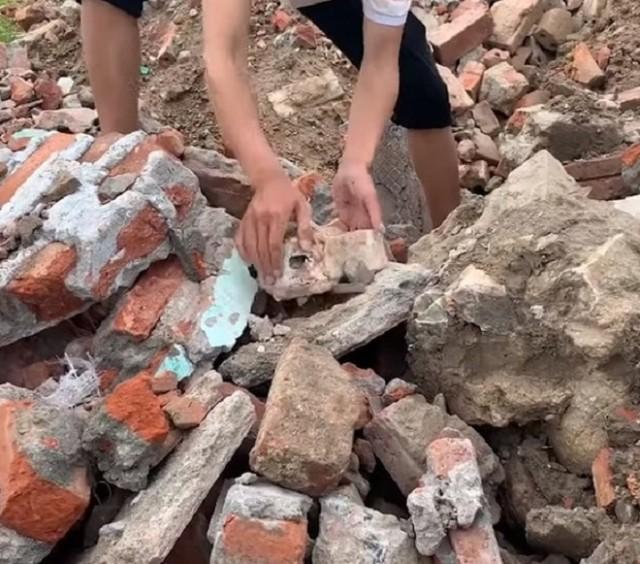 После землетрясения рухнули некоторые здания. Среди завалов вдруг стал раздаваться лай щенка. Видео!