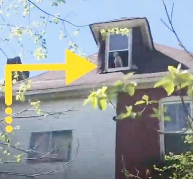 В заброшенном доме никто не жил. Тем удивительнее было то, что из окна верхнего этажа смотрел испуганный питбуль