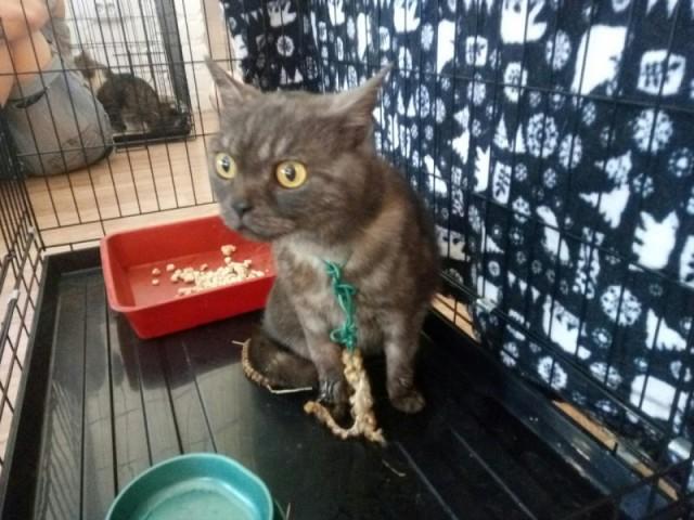 Хозяева держали запуганную кошку на цепи