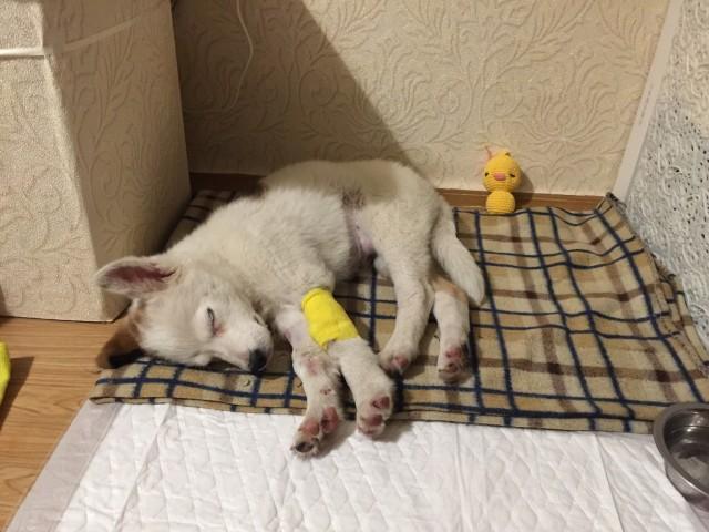 Девушка приютила щенка и уже через два часа поняла, что с ним что-то не так. Малыш оказался серьезно болен