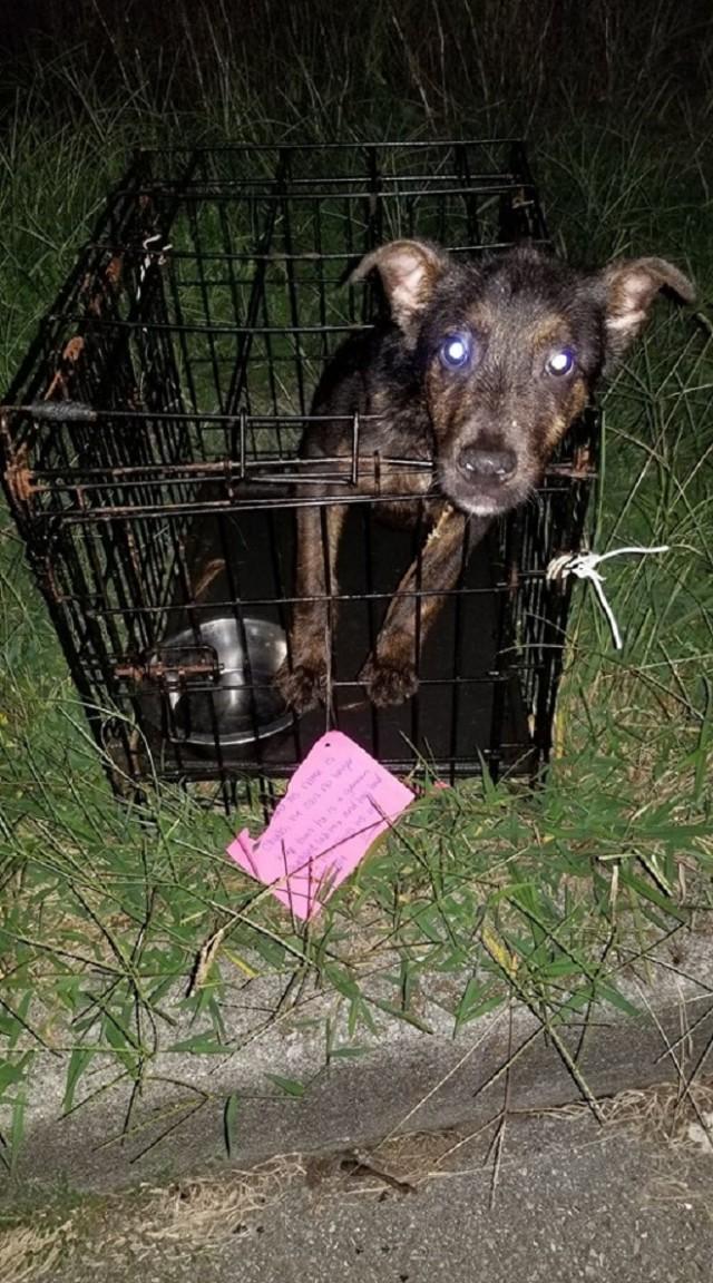 Худенький пес выглядывал из запертой клетки, а рядом лежала записка