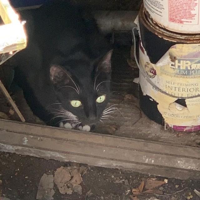 Котенок и кошка были больны и едва не погибли без помощи людей