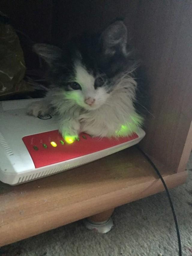 Котёнок в красных пятнах лежал у порога. Парень повёз усыпить страдальца… и привёз обратно!)