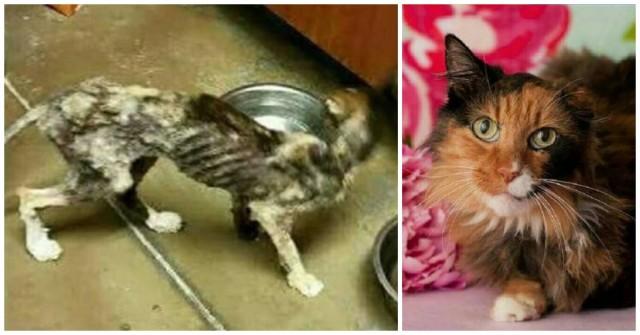 «Ветер подует — она полетит…» Как изменилась эта худая спасённая кошка — не верит никто!