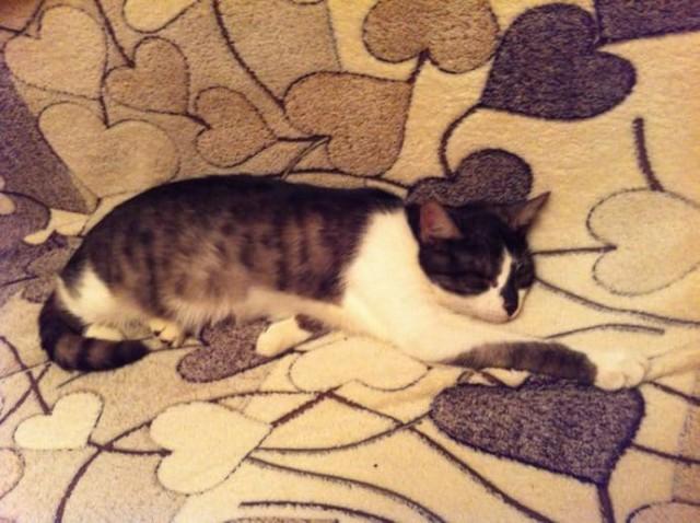 «Прощайся с кошками! До усыпления — 2 дня…» Кутузов и Магия: история с чудесами