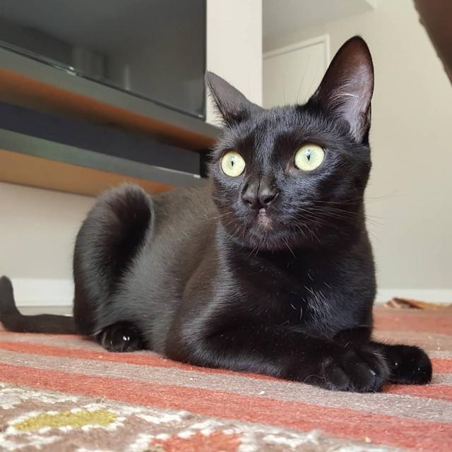 Котейка Доби родился с двумя носами. За это его обожает хозяйка и тысячи людей в инстаграме
