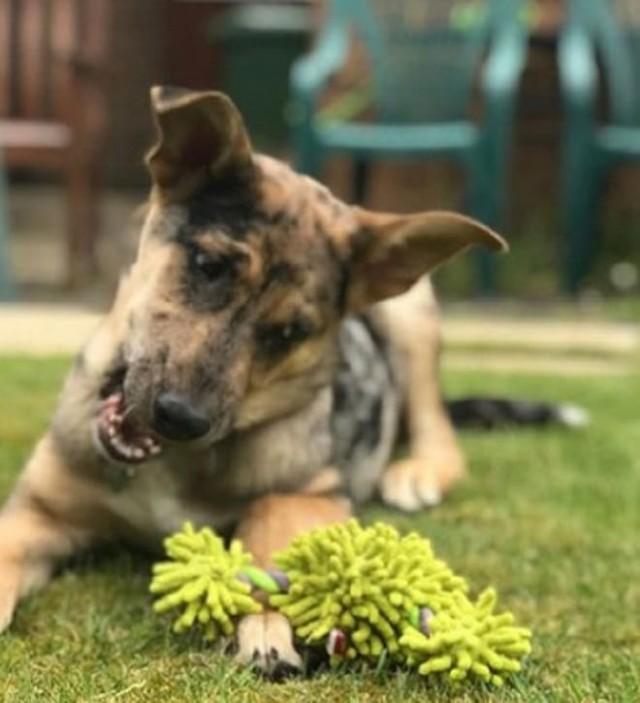 Брошенный в Румынии, щенок выжил и совершил путешествие в другую страну. Видео!