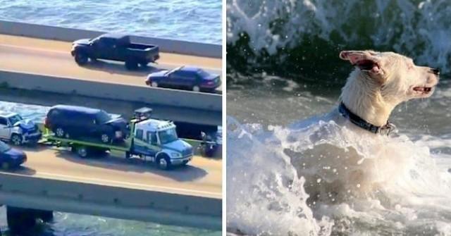 При столкновении машин пес упал в воду и стал тонуть
