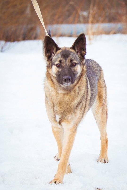 """Хозяева - нелюди устали от своей собаки, и захлопнули дверь перед ее носом. """"Надоела"""" - так они объяснили свой поступок."""