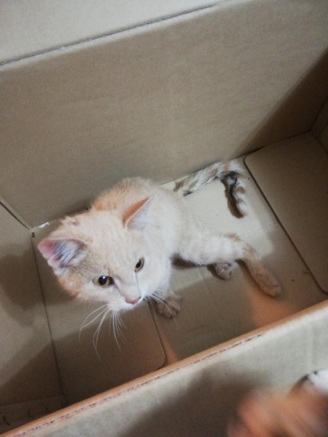На Урале спасли котёнка, которого расстреляли из пистолета 9-тью пулями.