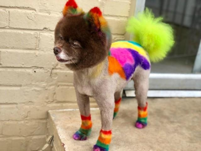 Креативный грумер создает собакам сумасшедшие образы. (19фото+1видео)