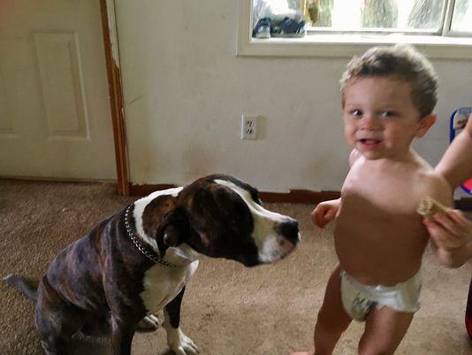 Полиция нашла пропавшего в лесу ребенка по следам лап не отходящей от него собаки!