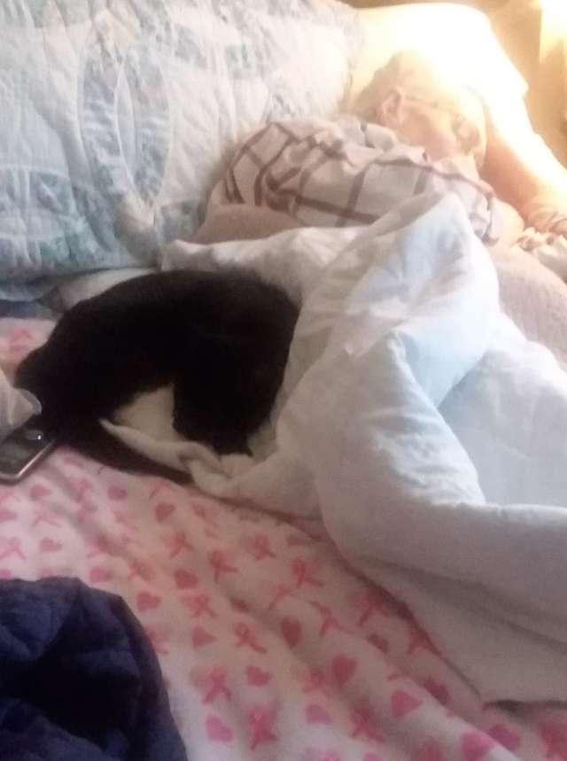 Преданная кошка не отходила от умирающей бабушки, а потом продолжала приносить ей подарки