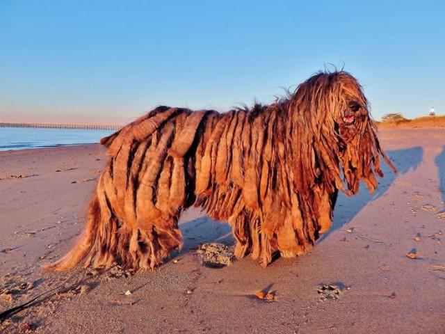 Собаки с самой необычной и крутой внешностью. 20 Фото красавцев!