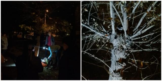 50 красноярцев шесть часов снимали с дерева енота - Видео!