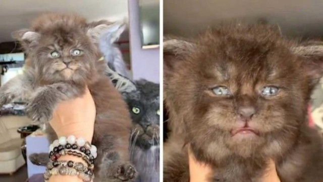 Подмосковные «котята-оборотни» покорили интернет! Как Вам такие котики?Видео!