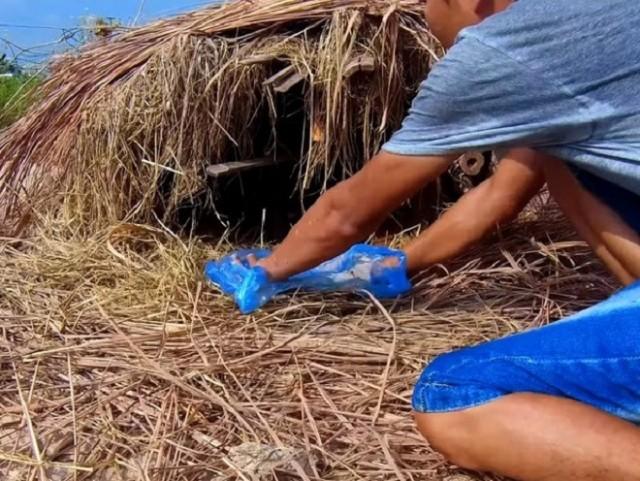 Мужчина отправился на поиски брошенных щенков и обнаружил их в домике из сена - Видео!