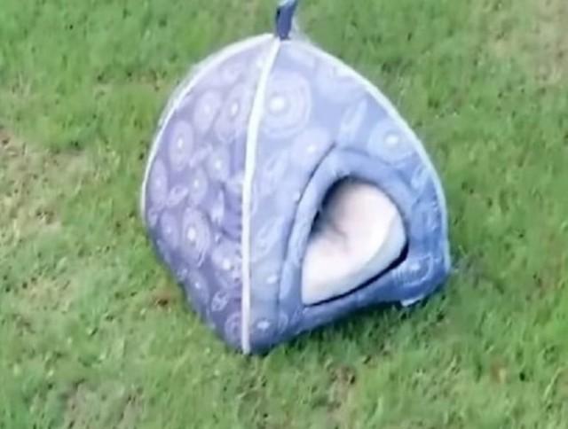 На лужайке стоял собачий домик, а внутри сидело брошенное существо