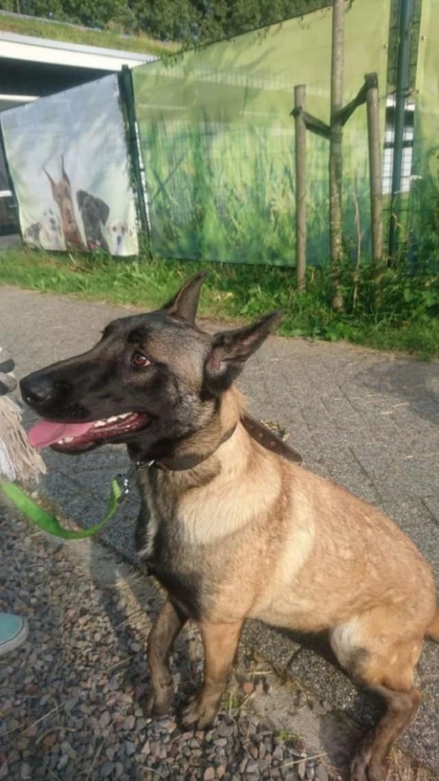 Собака, найденная в клетке, встречала людей с «улыбкой» на мордочке
