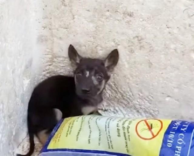 Два щенка сидели в коробке для мусора. Их выбросили из-за ран на мордочках! Видео спасения!