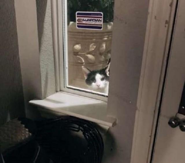 Кот лез в дом к чужим людям, не давая себя игнорировать. И не зря, потому что он был совсем не бездомным