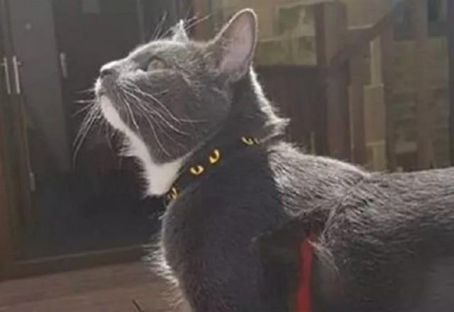 Грабитель отрицал свою причастность к преступлению, но следы от кошачьих лапок сказали всё сами за себя...