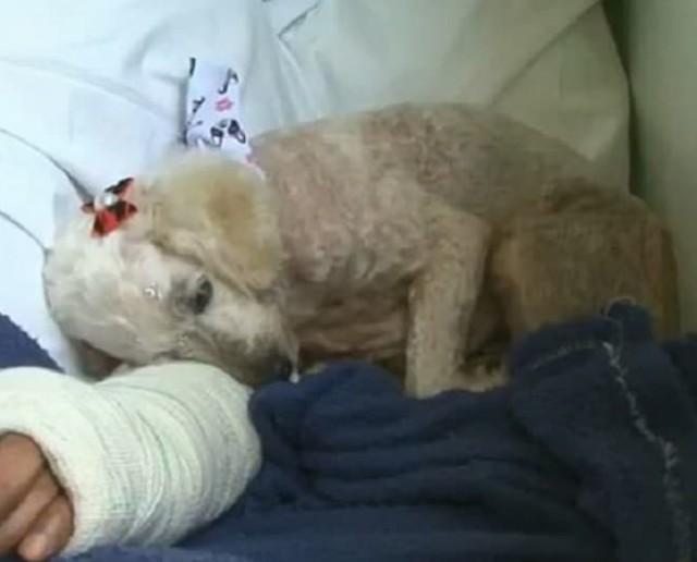 Дверь больничной палаты открылась, и туда «влетела» взволнованная собака