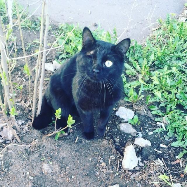 Дождь. Лужа. Одноглазый кот терпит побои от уличного собрата… А вскоре он станет чьей-то удачей!