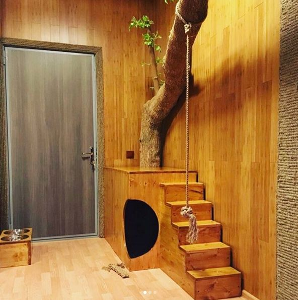 В Пензенской области в квартире живет пума Месси: Трогательное Видео!