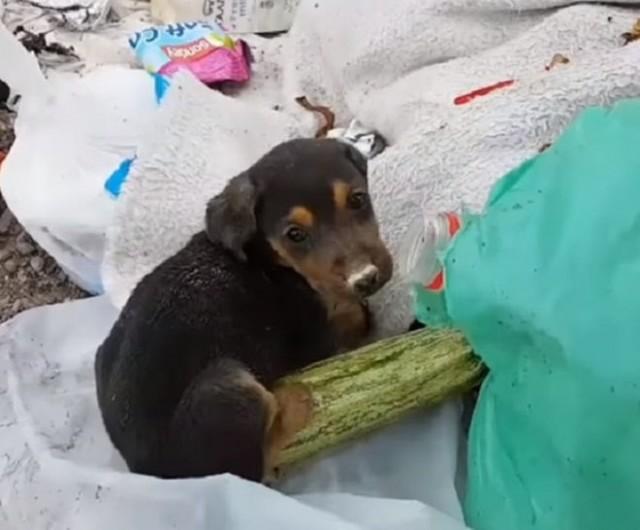 В куче мусора копошились щенки, которых выбросили люди.Одного из них ждали счастливые перемены - Видео!