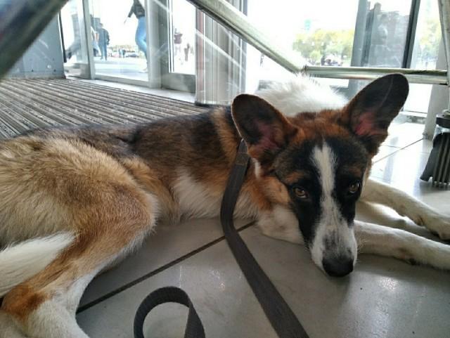 Собака, от которой все отказались, нашла место, где ее полюбили