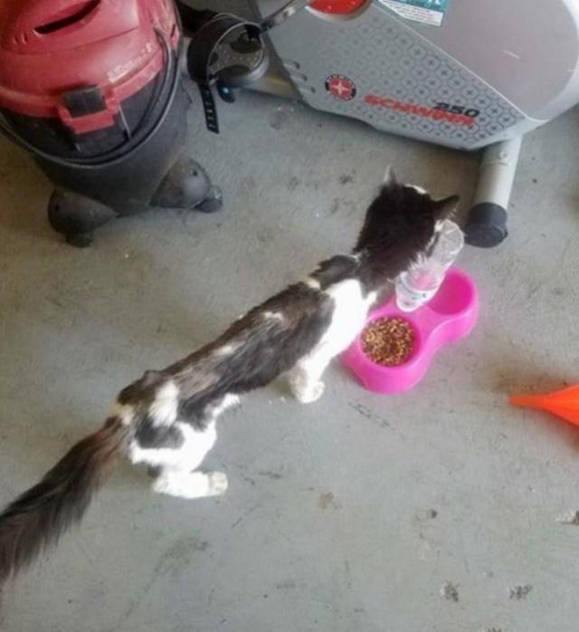 Голодный бездомный кот с критическим весом для взрослого животного всего в 2 кг, был похож на скелет, и скитался по улицам всю свою жизнь.