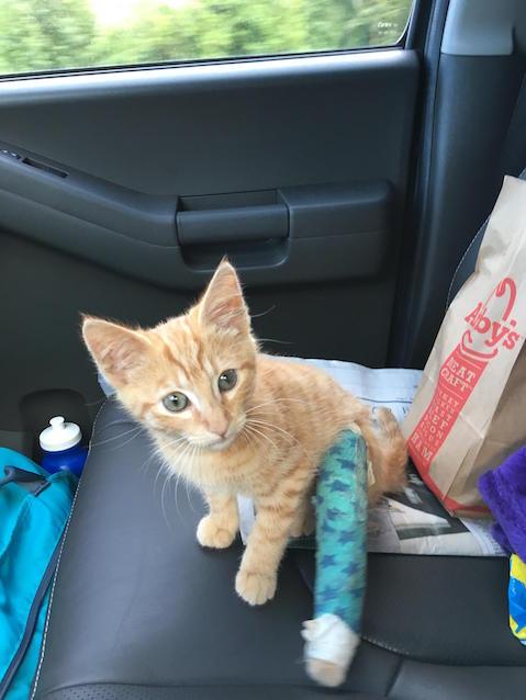 История о бездомной кошке, которая попросила людей спасти ее котенка