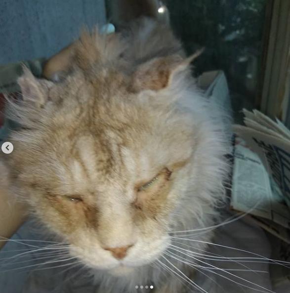 «Больше всего породистая кошка была похожа на болотного тролля»
