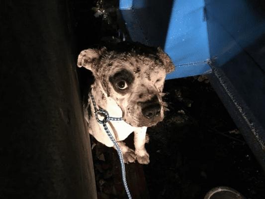 Израненый пес прятался между контейнерами и очень боялся людей