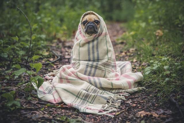Как домашние животные предсказывают погоду: приметы