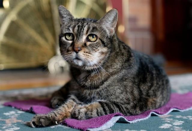Как понять, что кошка умирает: признаки и стадии